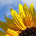 Belleza Natural con flores