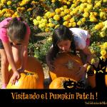 Halloween y el Pumpkin Patch